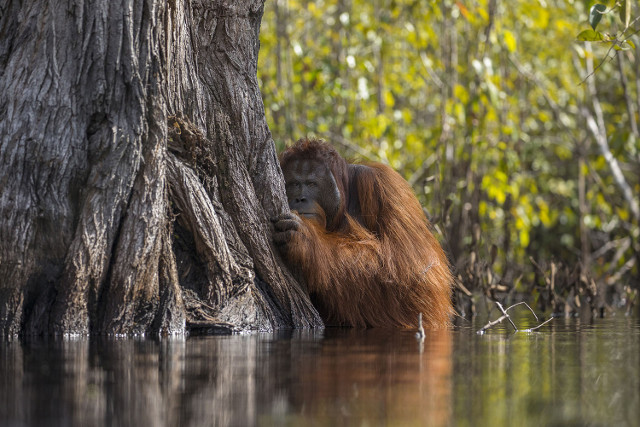 Face to Face in a River in Borneo. Grand Prize Winner and First Place, Wildlife