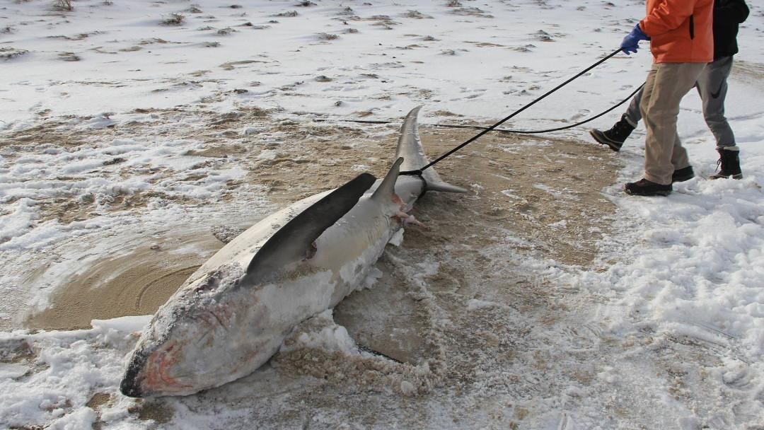 Tiburones congelados