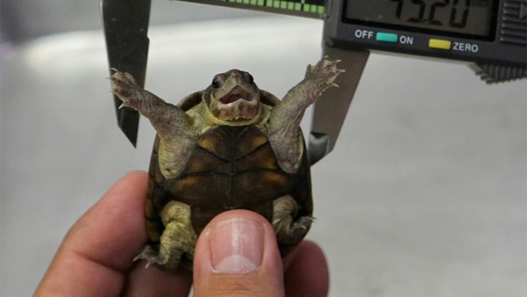 Una tortuga descubierta en Puerto Vallarta
