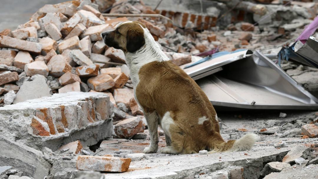 Animales sismos