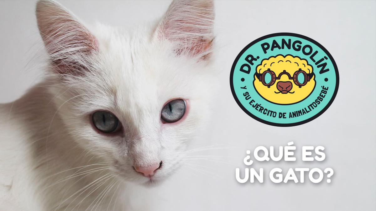 que-es-gato-dr-pangolin
