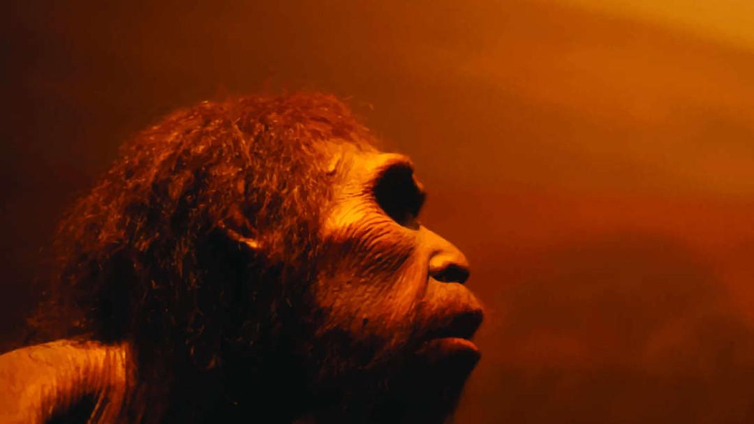 Imagen de un neandertal en un museo