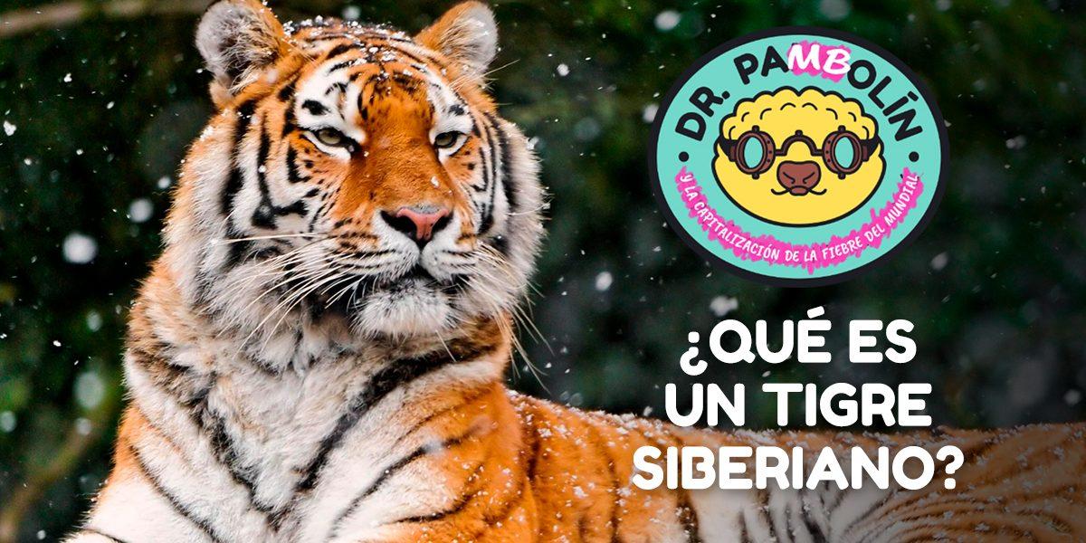 tigre-siberiano-dr-pangolin