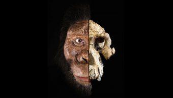 29/08/19 Ancestro Humano, Australopithecus Anamensis, MRD, Lucy