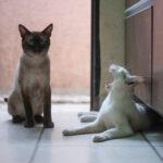 gatos con botas 08/12/2019