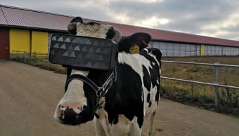 Vacas Visor VR