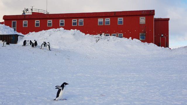 En total fueron 356positivos de Covid-19 en Antártida