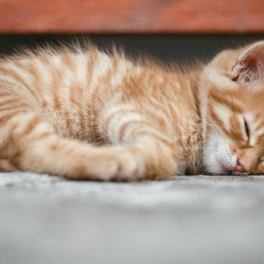 Gatito da positivo a Coronavirus y Corea evalúa vacunar también a las mascotas